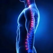 Istilah Chiropractic